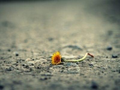 flower amongst thorns|Girl in Field|Girl Sitting